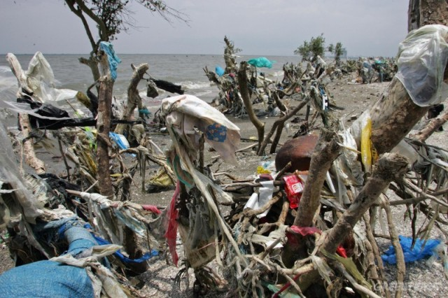Mangrove swamp choked with discarded plastic rubbish. Manila Bay,  Philippines. Aug. 2006.
