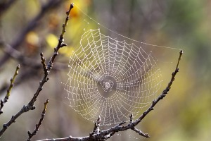spider_web_with_dew_drops03