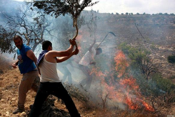 Seed of The Serpent Attack Again: Jewish Settlers Set Fire